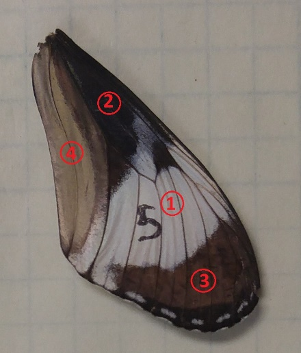 Butterfly Reflection Measurement Sample 1