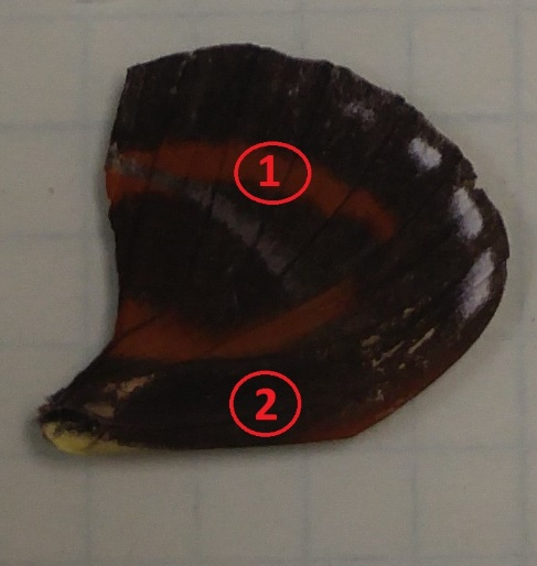 Butterfly Reflection Measurement Sample 2