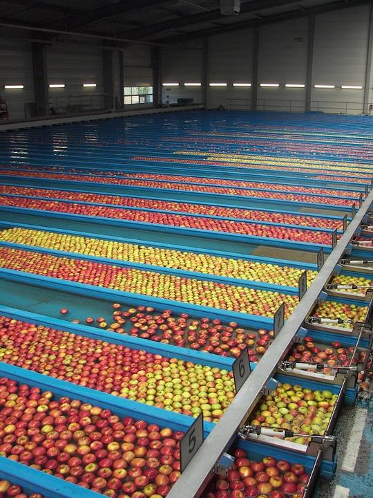 Fruit sorting apples