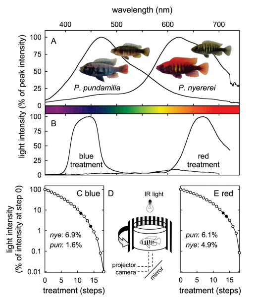 Sensory Drive in Cichlid Speciation application effects of color light on fish