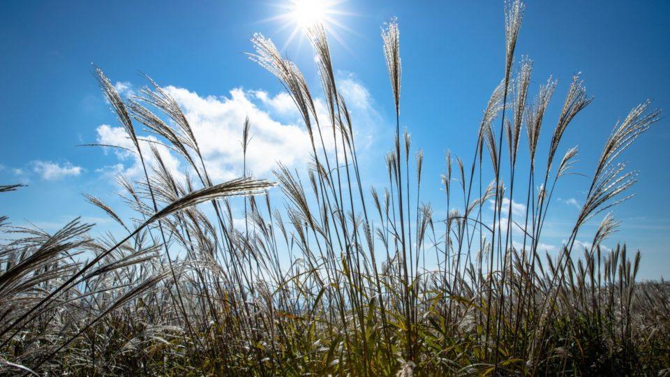 Agriculture Grain Analysis